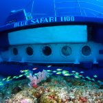 Blue Safari Mauritius
