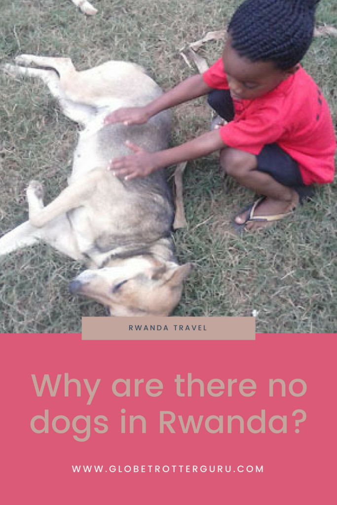Why are there no dogs in Rwanda?