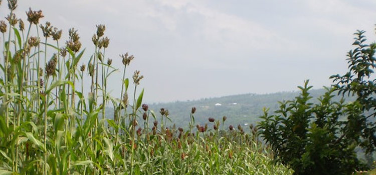 Rwanda Today – Over 20 years since the Genocide