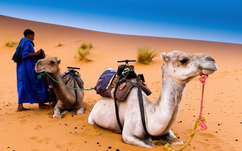 camel trekking Merzouga Sahara Morocco